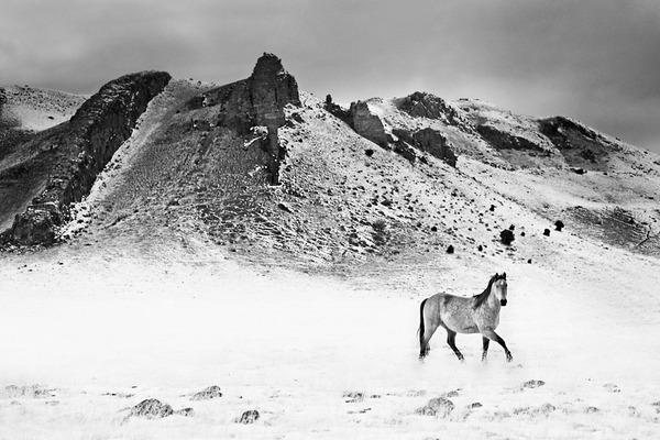 野生の馬の写真 (10)