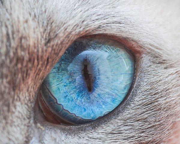 まさにキャッツアイ!綺麗な猫の瞳を撮影した画像16枚 (12)