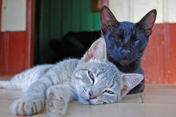 猫は自分の瞳が大好き