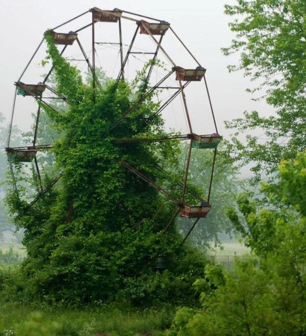 自然や植物に呑み込まれていく廃墟や人工物の画像 (16)