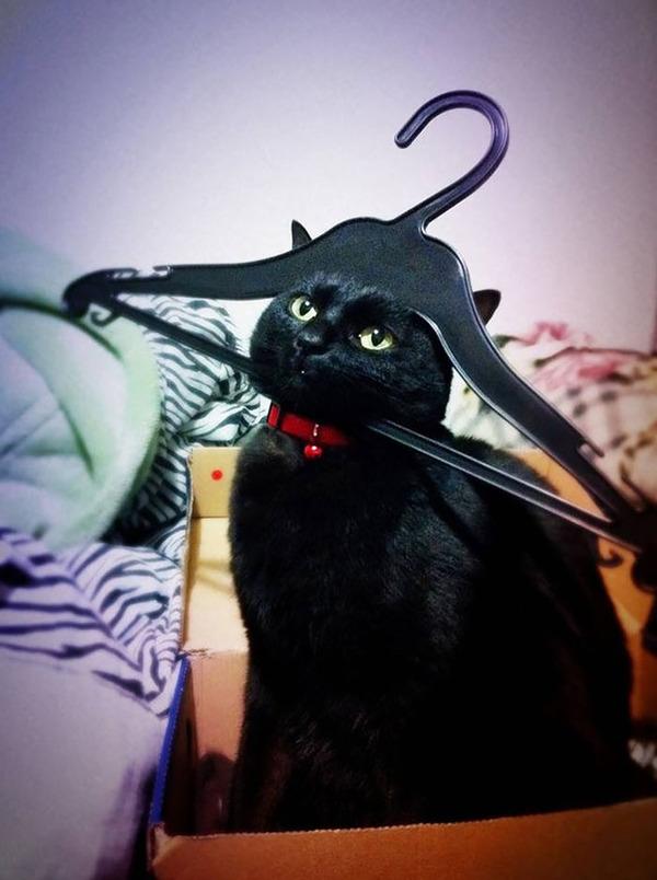 大ピンチに陥ったドジっ子なにゃんこ達!【猫画像33枚】 (20)