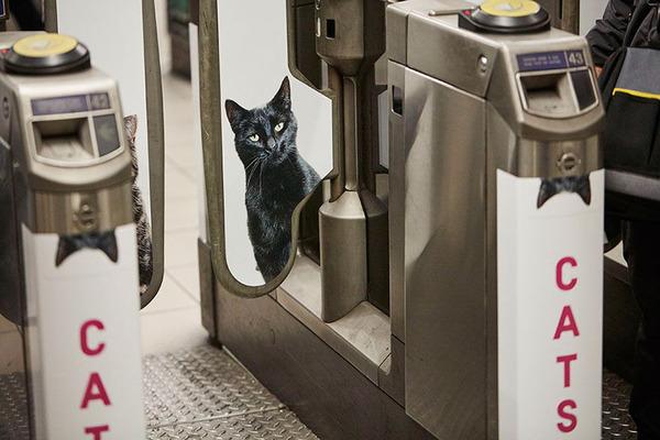 猫だらけ!猫の写真で満たされたロンドンの地下鉄 (3)