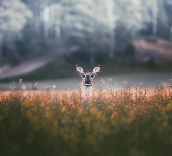 キツネやリスと戯れようぜ!フィンランドの胸キュン野生動物 (5)