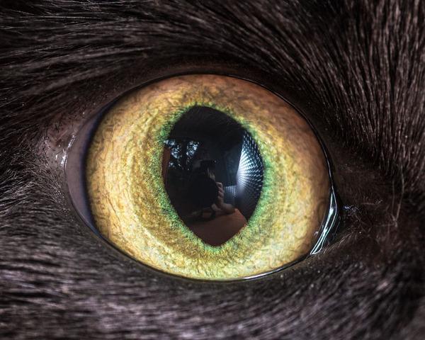 まさにキャッツアイ!綺麗な猫の瞳を撮影した画像16枚 (13)