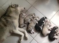 わんこファミリー!母犬とその子犬達の集合写真32枚【犬の親子画像】
