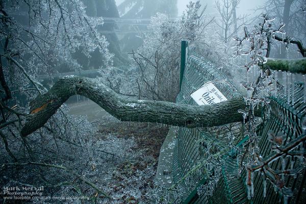 凍結した木が折れる