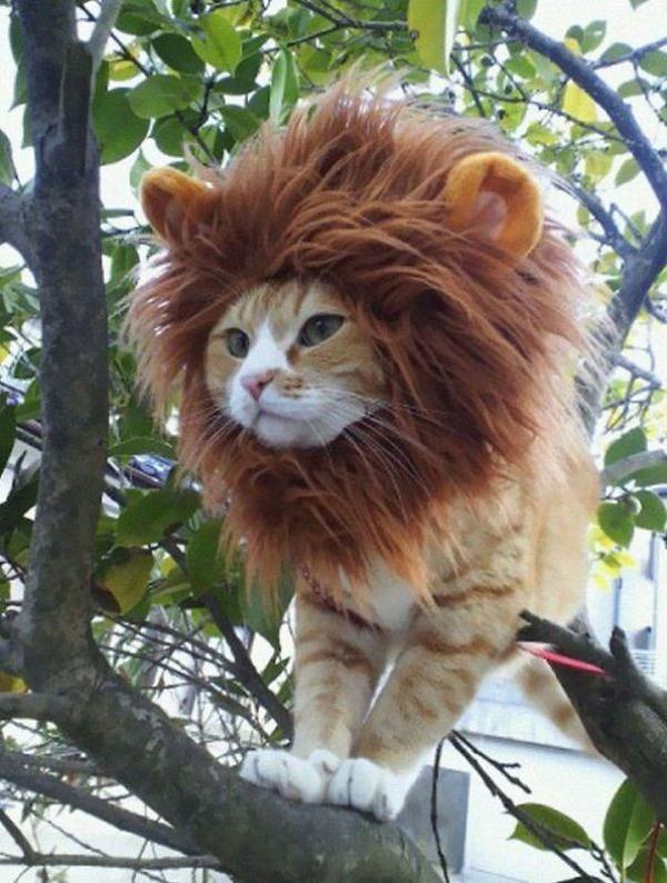 コスプレ猫!ハロウィンだし仮装した猫画像 (15)