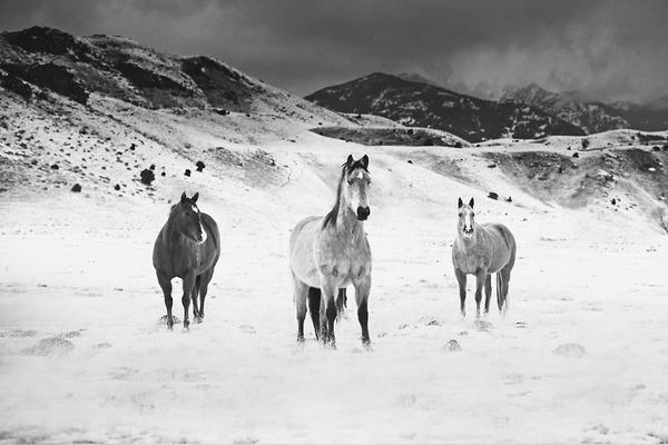 野生の馬の写真 (11)