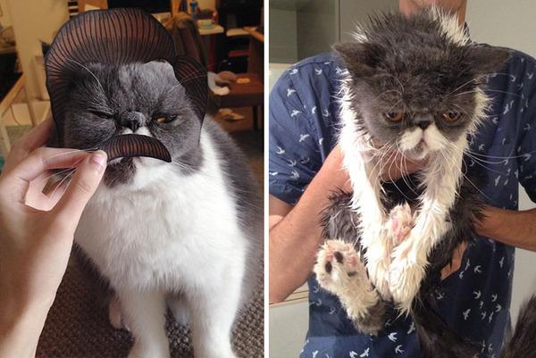 もふもふな動物たちがお風呂で変貌する…!【犬猫画像】 (22)