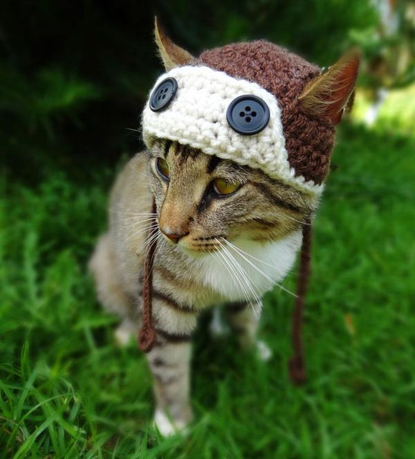 かわいさアップ?猫にぴったりなペット用ニット帽! (2)