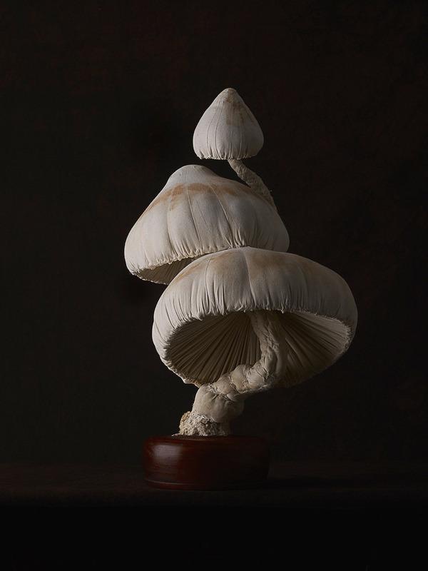 おいしそう?ヴィンテージな生地で作られたリアルなキノコ彫刻 (8)