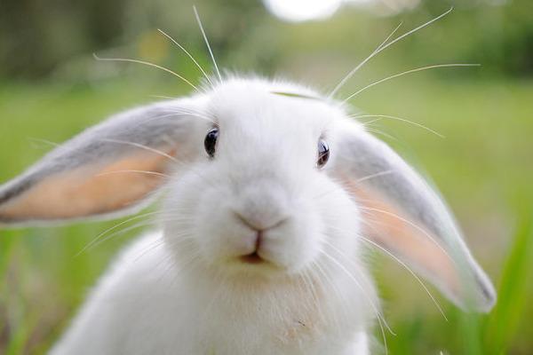 超ふわふわ!モフモフで愛らしいウサギの画像20枚 (16)