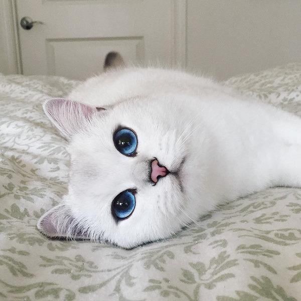 美しい…。綺麗な青い瞳をした白猫が話題!【猫画像】 (3)