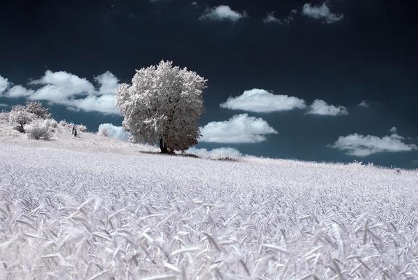 IR(赤外線)カメラで撮影されたポーランドの自然写真が美しい (8)