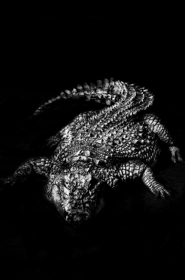 アウトラインとシルエットが美しい白黒の動物写真 3