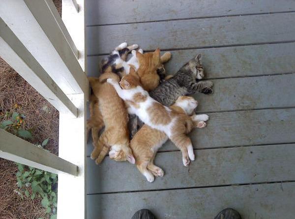 みんなで寝ると暖かい