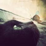 蝶々と動物達のファンタジーなコラボ写真!動物の鼻の上の蝶
