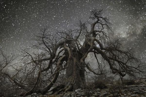 星空と古い木の美しい風景写真 7