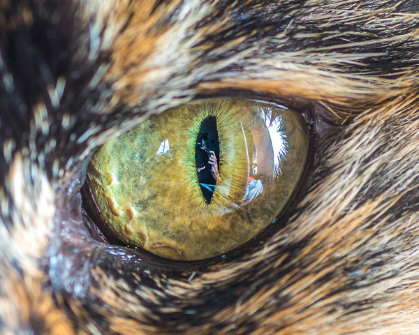 まさにキャッツアイ!綺麗な猫の瞳を撮影した画像16枚 (9)