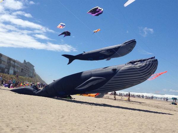 空の水族館!超大きいシロナガスクジラの凧がビーチに浮かぶ (7)