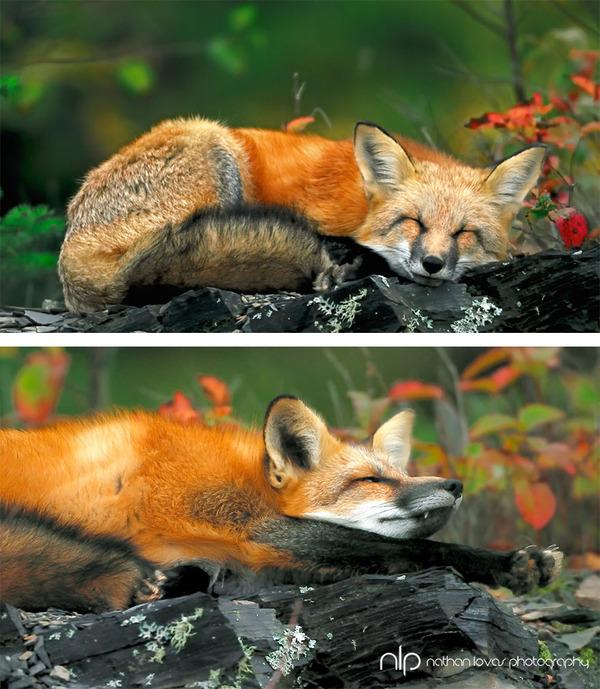 紅葉や秋の森の中を楽しむ動物たちの画像 (29)