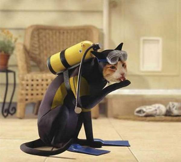 コスプレ猫!ハロウィンだし仮装した猫画像 (12)