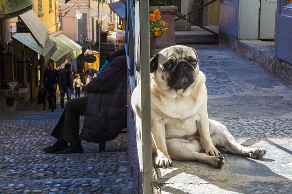 遠近感と錯覚の関係で超巨大に見える犬画像 (16)
