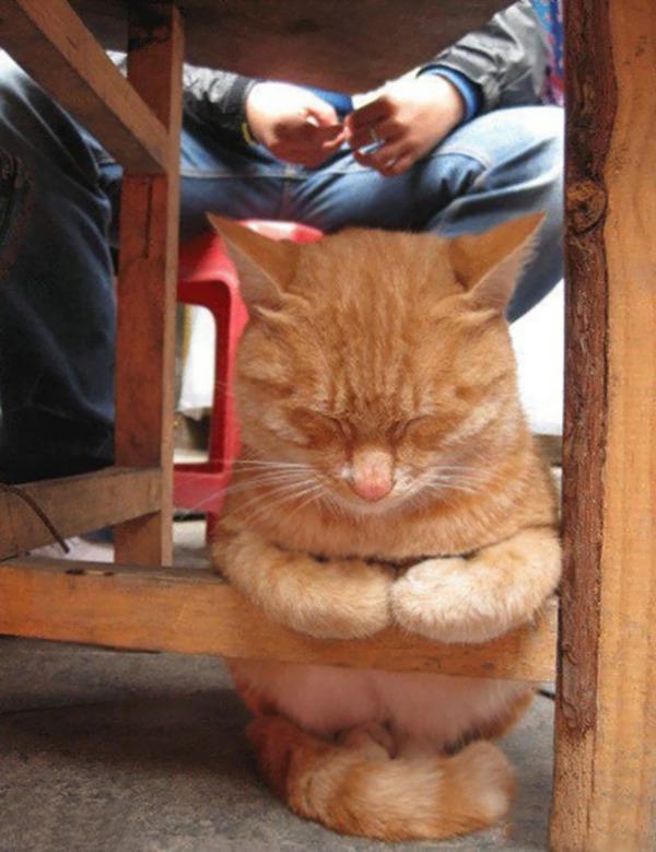 寝てるだけなのに…かわいすぎる猫たちの画像 (21)