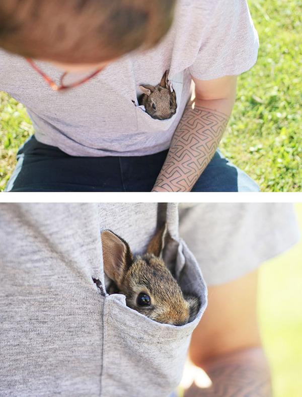超ふわふわ!モフモフで愛らしいウサギの画像20枚 (7)