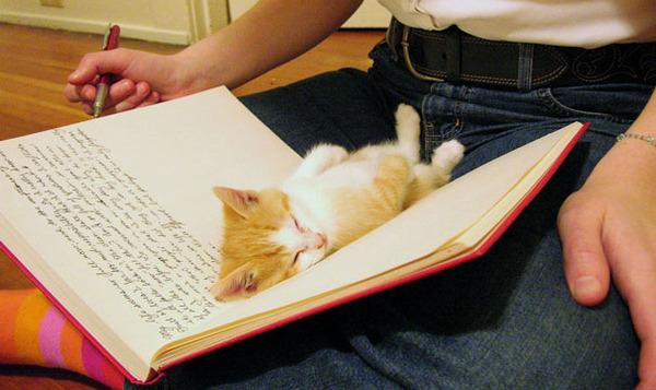 ページをめくることを阻止している猫