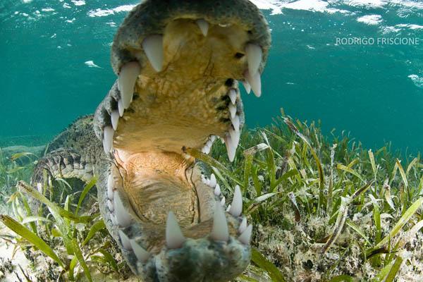 野生のワニの写真を撮るために危険を冒すカメラマン (9)