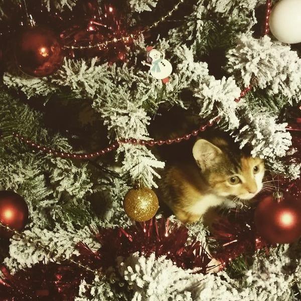 猫、あらぶる!クリスマスツリーに登る猫画像 (40)