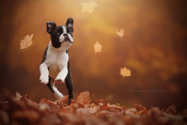 秋が来た!紅葉と遊ぶ犬画像 (5)