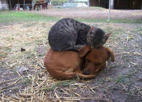 猫と犬のお昼寝