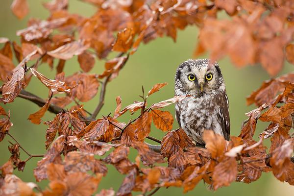 紅葉や秋の森の中を楽しむ動物たちの画像 (24)