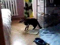 猫のしなやかで芸術的なジャンプ特集!猫のおもしろGIF画像