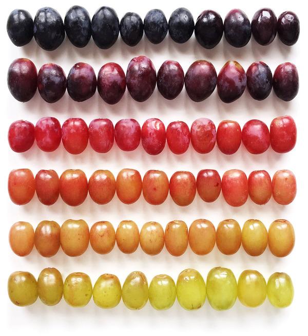 果物のカラフルなグラデーション アート写真 Brittany Wright