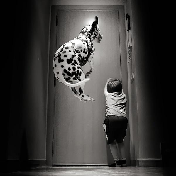 ペットは大切な家族!犬や猫と人間の子供の画像 (62)