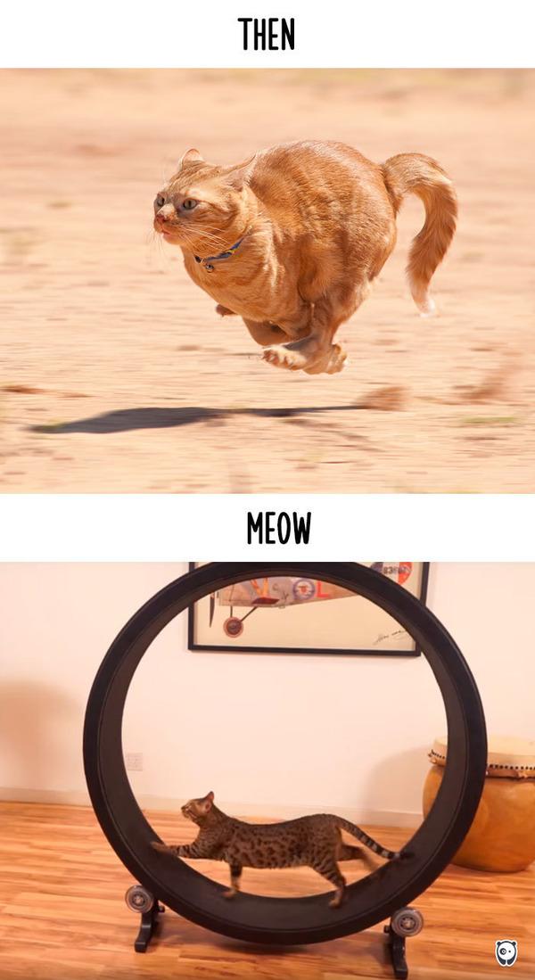 【猫画像】猫の生活を過去と現在で比較! (10)