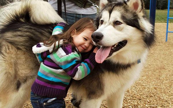 ペットは大切な家族!犬や猫と人間の子供の画像 (56)