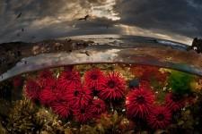 水中と水上を隔てた幻想的な写真!海の中の異世界感