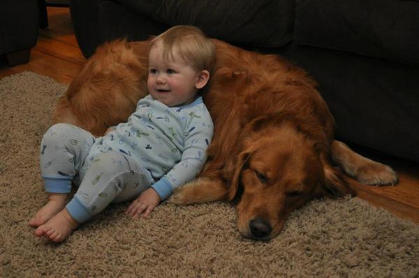 ペットは大切な家族!犬や猫と人間の子供の画像 (50)