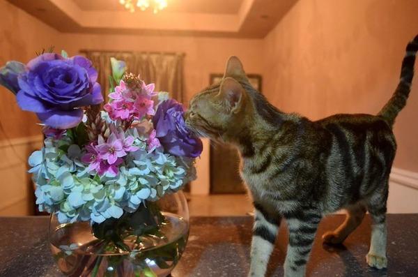 くんくん良い香り。花の匂いを嗅ぐ動物たちの画像 (34)