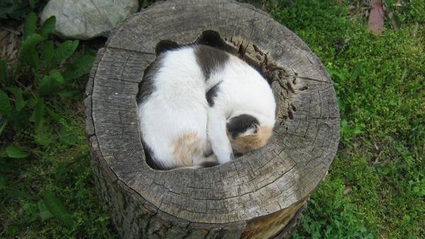 ジャストフィット猫 11