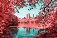 赤く染まるニューヨーク!IR(赤外線)カメラでセントラル・パーク