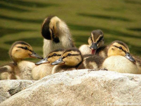 小鳥が温まる為に皆で寄り添っている可愛い画像 (20)