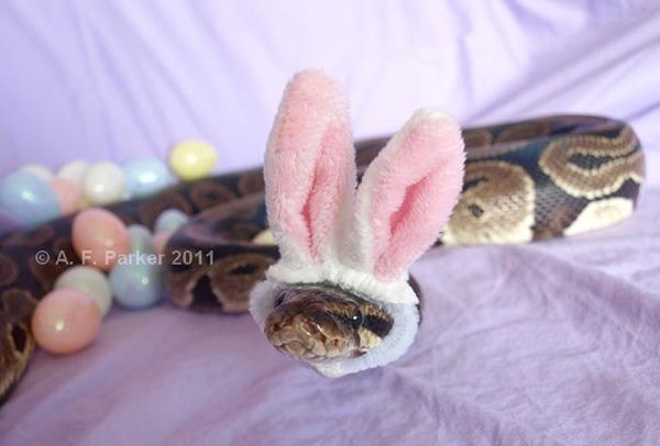 なんだこれカワイイぞ!帽子を被ったヘビ画像特集 (18)