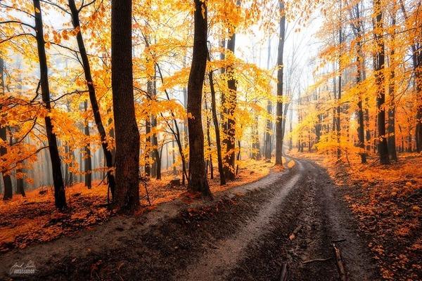 秋といえば紅葉や落葉の季節!美しすぎる秋の森の画像20枚 (12)