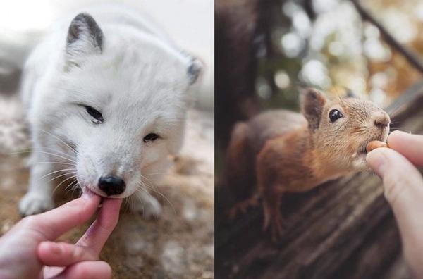 フィンランドの野生動物 11