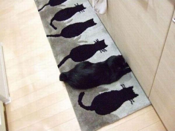 カーペット猫